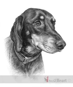 Drawing of Lizzie The first portrait off the easel this year is Lizzie, a Slovensky Kopov dog. She is drawn with graphite pencils on Fabriano Artistico paper in size. Easel, Pet Portraits, Pencil, Sketch, Dog, Pets, Drawings, Animals, Artists