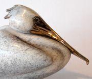 Nesting Pelican