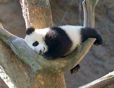Mr. Wu by Rita Petita, via Flickr