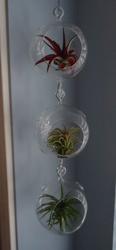 3 PackHanging Glass Plant Orb/Terrarium With by CTSairplants, $29.95