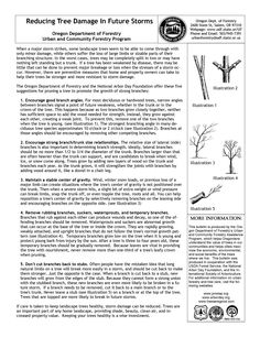 Reducing tree damage in future storms, by the Oregon Department of Forestry, Urban and Community Forestry Program
