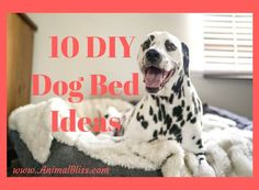 10 DIY Dog Bed Ideas Dogs tend to curl up in the oddest of spots. Smaller breeds especially can nap in cabinets, toy boxes, and laundry baskets. And, of Check out these 10 DIY dog bed ideas If you want to give your dog a comfy bed for rest and relaxation. There's no need to spend a fortune!