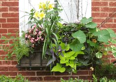Herb garden mixed with pretty florals
