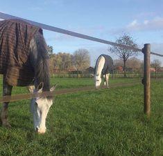 Als het om ronde palen gaat is Gadero.nl één van de grootste leveranciers van Nederland. Je kunt deze palen voor veel toepassingen gebruiken, bijvoorbeeld voor het verstevigen van een boompje en voor je tuinhekje of afrastering van tuingaas. Ook kun je met de korte maten een tuinverhoging, ook wel border genoemd, maken. Deze cilinder gefreesde palen van grenen hout zijn onder keteldruk geïmpregneerd. #afrastering Horses, Plants, Animals, Animales, Animaux, Animal, Plant, Animais, Horse