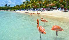 Aruba-flamingo's op strand
