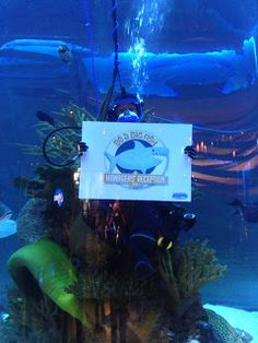 SHARING CREATIVITY and COMPANY: Stampin' Up!'s Managers' Reception 2014 at the Houston Aquarium