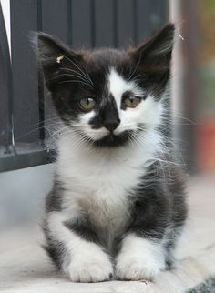 Adorable Kitten #Cute