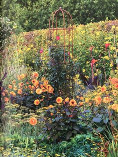 Muntons rose cages at Great Martins Runner Beans, Herbaceous Border, Obelisks, Gardening, Rose, Tips, Outdoor, Ideas, Outdoors