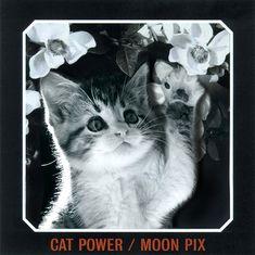 Kitten Power