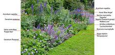Combineren met Aconitum - Tuin en landschap |