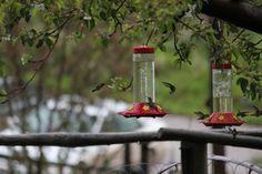 Hummingbirds at the Rudeen Ranch