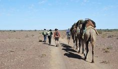 Joining an outback camel trek, Alexis Buxton-Collins steps back in time for a digital detox in South Australia's Far North. Camels, Back In Time, South Australia, Trekking, Places To Visit, Digital Detox, Explore, Landscape, Photography