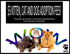 All kittens, cats and dogs (excluding those in the Spot Peabody Room; limit two per household) at the Houston SPCA will be available to approved adopters for an adoption fee of $5 from November 15-17 (*some restrictions apply).  Visit www.houstonspca.org for more information.