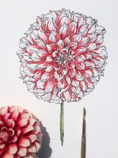 Image about cute in Great art by 貧乏神 on We Heart It Botanical Line Drawing, Botanical Illustration, Different Forms Of Art, Nature Sketch, Plant Drawing, Drawing Flowers, Art Society, Little Flowers, Watercolor And Ink