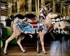 Golden Gate Park Carousel Herschell-Spillman Deer Outside Row Stander