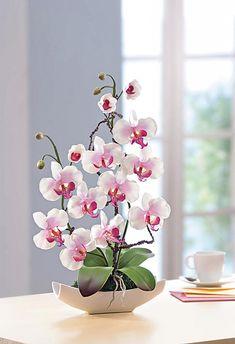 Tipps zur Orchideen- Schöne Ideen   Aequivalere