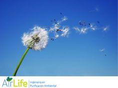 #airlife #aire #previsión #virus #hongos #bacterias #esporas #purificación  purificación de aire Airlife te dice. ¿qué es el ozono? El ozono es un gas incoloro, con un olor irritante y muy reactivo. Es también una de las formas en las que se encuentra el oxígeno en la naturaleza, su molécula está formada por tres átomos de oxígeno (O3). http://airlifeservice.com/