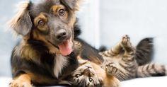 Cambiemos las ordenanzas municipales para proteger a los animales en Benalmádena FIRMA Y...