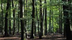 De scholen bezitten in 2030 ook elk een stuk bos of natuur wat niet omgekapt mag worden.