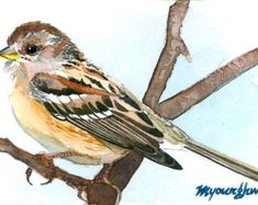 ACEO Limited Edition 9/25-  Sparrow on a branch, in watercolor