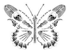 skeleton butterfly beauty