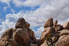 Photo of the Day: Toeing the Line Photo by Diane Sherwood (West Covina, California, USA); Joshua Tree National Park, California, USA Submit your best shots to our 14th Annual Photo Contest, open now!