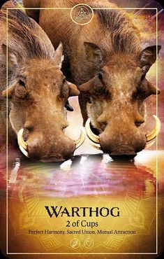 Animal Spirit Guides, Your Spirit Animal, 12 Zodiac Signs, Astrology Signs, King Of Wands, Native American Spirituality, Intuitive Empath, Animal Symbolism, Oracle Tarot