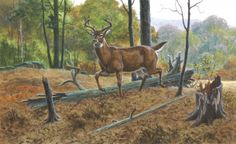 Part I: Patterning Strategies By Jim Nelson Doesn't it seem like, right at the beginning of every bow season, we hear about a hunter who had all of his cosmic hunting cards fall into alignment and wound up shooting a world-class buck? Shouldn't we all have that kind of luck. By paying attention to certain weather trends and employing patterning strategies, you can become that karmic hunter this September.