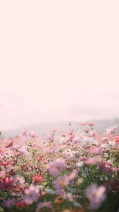 50+ Spring Aesthetic Wallpaper For iPhone (Free Download)
