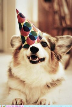 """""""Only a corgi could be cuter with a party hat askew than with it on straight!""""  - Daily Squee"""