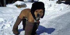 Cold Weather Care for Dogs
