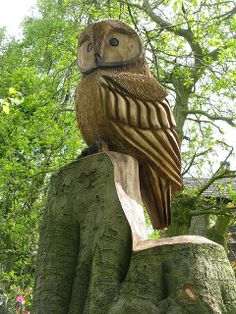 owl | Flickr – Compartilhamento de fotos!