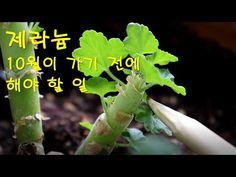 Celery, Herbs, Gardening, Vegetables, Lawn And Garden, Herb, Vegetable Recipes, Veggies, Horticulture
