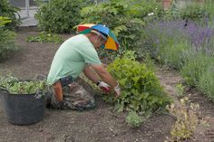 JULY 15, 2014 A Little Of My Farm In Mid-July | Chhiring was busy at work weeding and dead-heading in the cutting garden.  He protects himself from the sun by wearing a humorous, but practical umbrella hat.