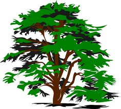 family tree clip art   Large