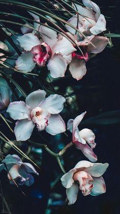 - Photography, Landscape photography, Photography tips Flower Iphone Wallpaper, I Wallpaper, Aesthetic Iphone Wallpaper, Nature Wallpaper, Pattern Wallpaper, Aesthetic Wallpapers, Wallpaper Backgrounds, Pink Flowers, Beautiful Flowers