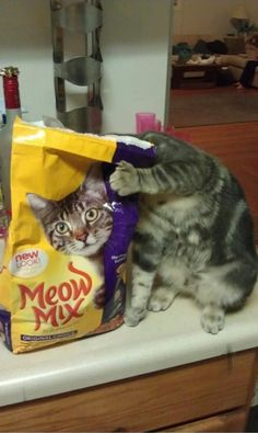 Don't I look like the Meow Mix cat?