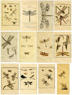 Dragonfly scraps, images to download and print for collage, decoupage, altered art and other papercrafts.