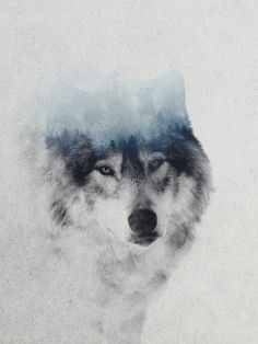 Grey Wolf In Fog Art Print by Andreas Lie | Society6