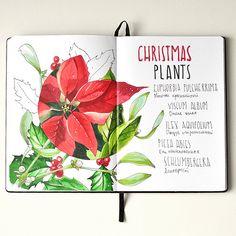 Christmas_plants | by Anna Rastorgueva