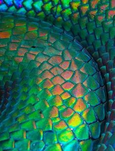 Artist Unknown This is an up close picture of snake skin. The reflective surface really shows smooth texture. Patterns In Nature, Textures Patterns, Organic Patterns, Animal Patterns, Irises, Color Inspiration, Creatures, Snake Scales, Reptile Scales