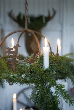 candles with evergreens
