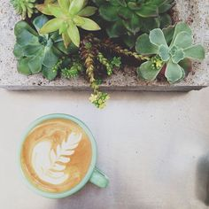 Latte art and succulents. Two of my favorite things :) But First Coffee, I Love Coffee, Coffee Break, My Coffee, Morning Coffee, Coffee Mornings, Cappuccino Coffee, Latte Art, Coffee Cafe
