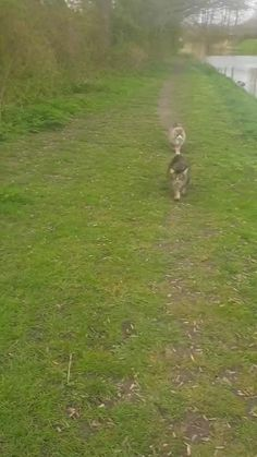 Funny Cute Cats, Cute Baby Cats, Cute Cat Gif, Cute Funny Animals, Cool Cats, Bad Cats, Crazy Cats, Animals And Pets, Baby Animals