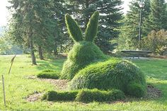 topiary rabbit.  You woke it up.  It's looking right at you.