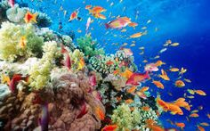 Картинки по запросу морское дно фото