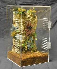 20 Awesome Tarantula Enclosure To Inspire You - meowlogy Tarantula Habitat, Tarantula Enclosure, Pet Tarantula, Animal Z, Animal Room, Spider Baby, Pet Spider, Reptiles, Gecko Cage
