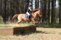 The War Horse jump! (: