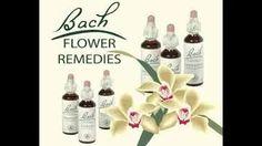 https://flic.kr/p/xSc1Sh | Bach Flower Remedies - Rxhomeo | www.rxhomeo.com/pharmacy/homeopathic.php?act=viewCat&...