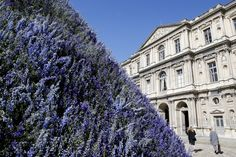 A hill of delphiniums by Belgian Alexandre de Betak in the Louvre for Christian Dior Spring 2016 Ready-to-Wear